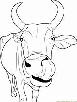 Cow Face Indian Coloring Pages Coloringpages101 sketch template