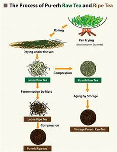 Tea Plant Diagram | www.pixshark.com - Images Galleries ...
