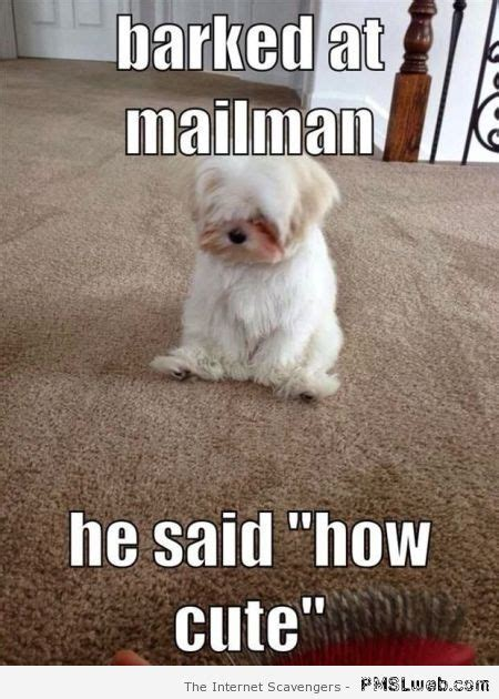 Dog Problems Meme - funny dogs when our canine friends take control pmslweb