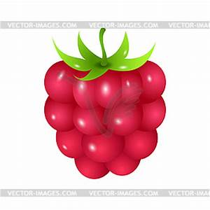Raspberry Clipart - Clipart Suggest