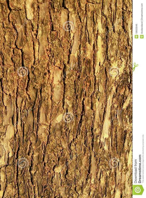 brown wood bark texture royalty  stock image image