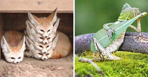 stunning   animals snapped