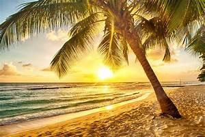 tropical paradise beach palms sea sunset beach sea palm ...