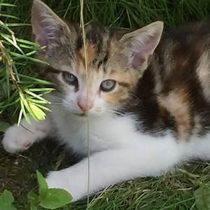 tabby ginger white TORTOISESHELL female Kitten cat ...