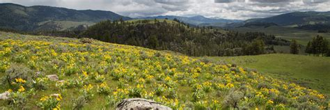plants yellowstone national park  national park