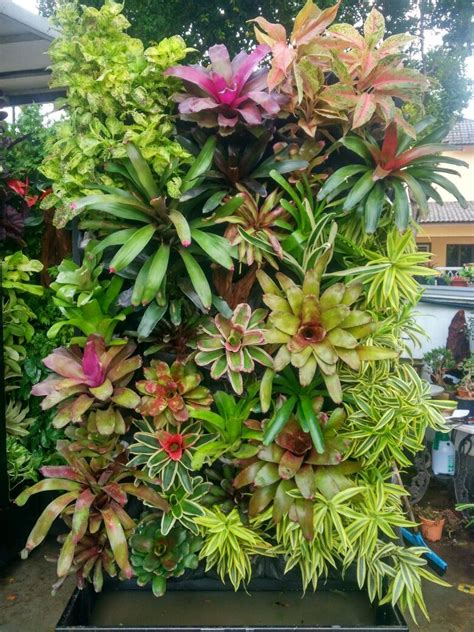 Plants Used In Vertical Gardens by Bromeliad Wall Vertical Garden Vertical Garden