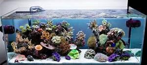 Idee Decoration Aquarium : d coration aquarium le comparatif complet jardingue ~ Melissatoandfro.com Idées de Décoration
