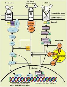 The General Interplay Between The Canonical Tlr Signaling