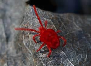 Winzige Rote Tierchen : winzige rote tierchen seite 2 allmystery ~ Lizthompson.info Haus und Dekorationen