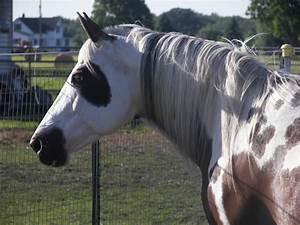 Horseplay Equestrian > The Horses