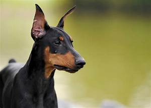 Meet Eight of the Fastest Dog Breeds in the World