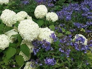Welche Pflanzen Passen Gut Zu Hortensien : garten tipps pflanzenkotten heimann in emsdetten ~ Lizthompson.info Haus und Dekorationen
