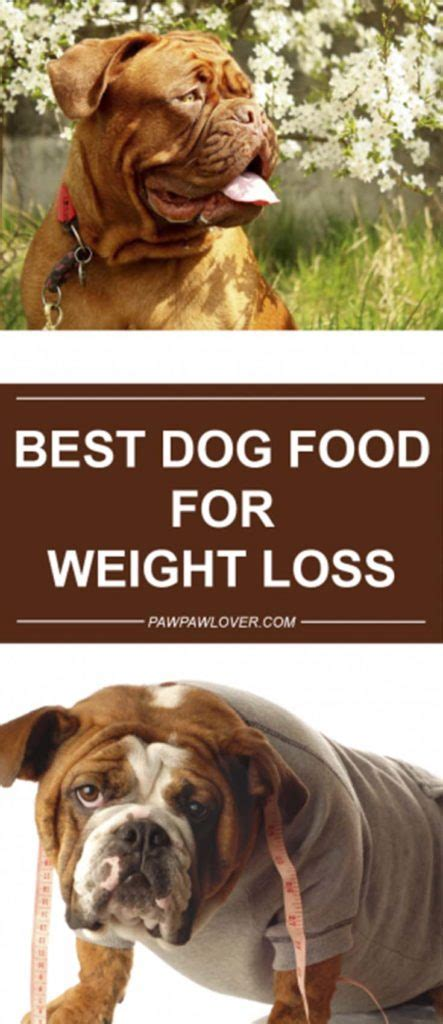 diet dog food  weight loss   calorie dog food
