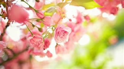 Spring Flowers Desktop Wallpapers Computer