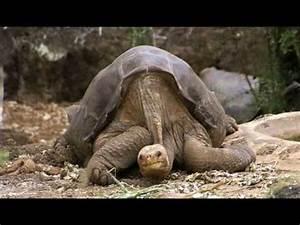 The Rarest Animal on Earth! - YouTube