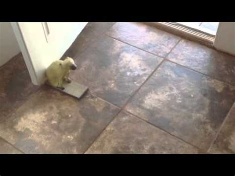 how to install ceramic tile in a mobile home