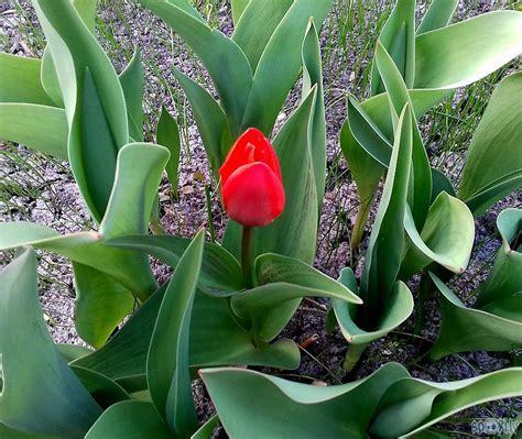 Pavasara toņi - Spoki