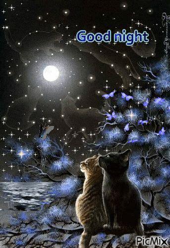 picmixcom autum nights gifs good night picmix cats