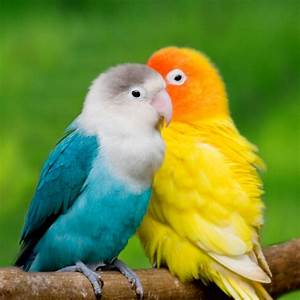 Wallpaper Gallery: Love Bird Wallpaper - 1