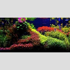 What's Your Aquascape Style? Cflas