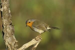 Kleine Vögel Im Garten : v gel beobachten vogel und naturschutzgruppe brandau e v ~ Lizthompson.info Haus und Dekorationen