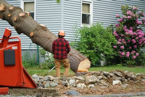 homeowners insurance cover tree removal cloveredcom