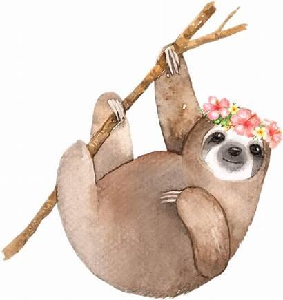 Sloth Watercolor Sloths Sign Ftestickers Save Picsart