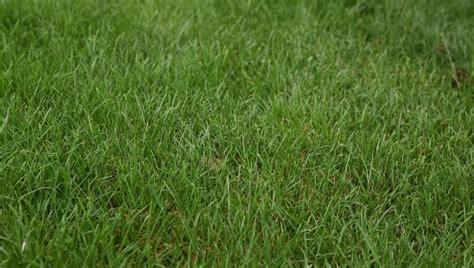 grass textures   jpg png psd ai vector eps