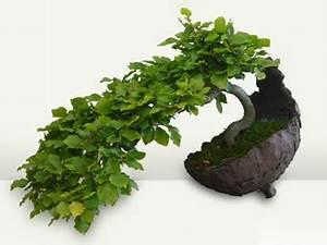 Pflege Von Bonsai Bäumchen : bonsai b ume schalen zubeh r erde werkzeug und viles mehr ~ Sanjose-hotels-ca.com Haus und Dekorationen