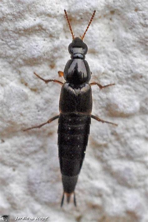 il ressemble 224 une larve d insecte mais n en est pas une