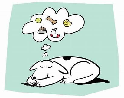 Dream Dreams Dogs Sleep Dog Sweet Had
