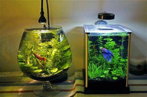 ide desain aquarium kreatif