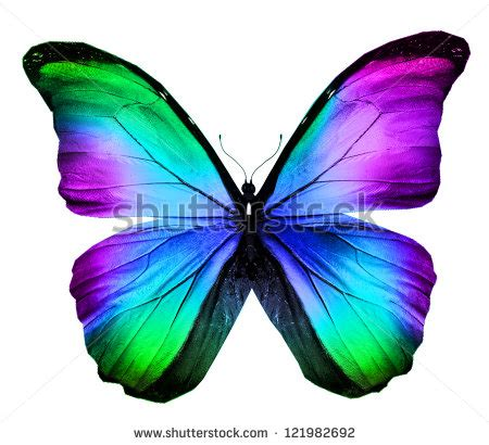 colourful butterfly stock images royalty  images