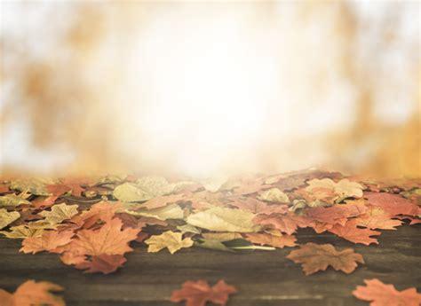 autumn vectors   psd files