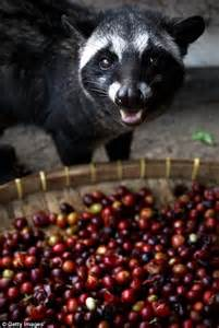 Kopi luwak style coffee beans passed through human intestines by home brewer on sale for $30 a