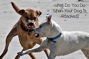 Go Dogs Go What Should You Do If Your Dog Is Attacked In A Fight