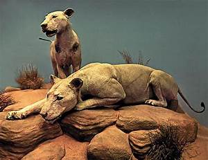 2 Lions In Chicago Museum - Best Image Konpax 2018