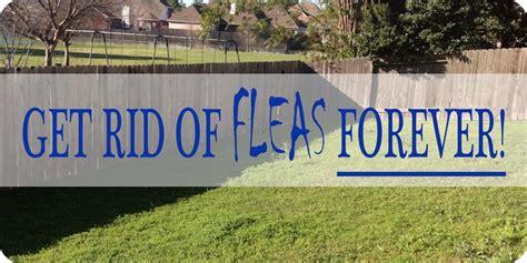 rid  fleas naturally