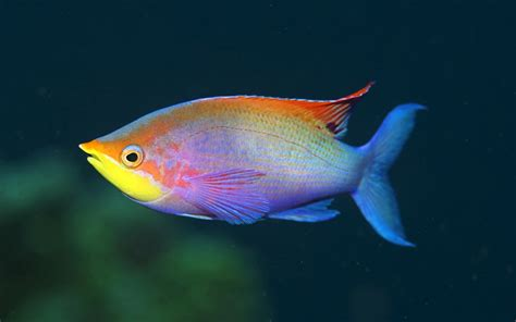 Rainbow Fish Wallpapers  2013 Wallpapers
