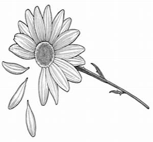 Beautiful Meanings and Creative Ideas for Daisy Tattoos