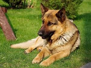 Best Dog Breeds - Business Insider