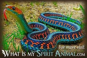 Snake Facts, Songs, Movies & Trivia | Reptile Animal Facts