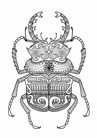 Coloring Zentangle Beetle Pages Adult