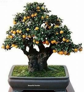 Bonsai Baum Garten : 237 besten bonsai bilder auf pinterest bonsai exotische ~ Lizthompson.info Haus und Dekorationen