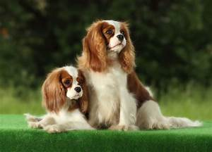 20 Small Dog Breeds That Are Beyond Cute