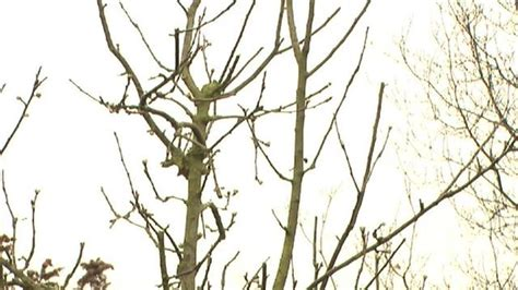 pruning apple trees in autumn apple tree branches dying