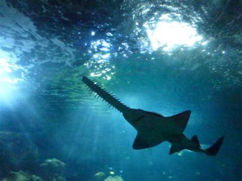 requin magnifique picture of aquarium la rochelle la rochelle tripadvisor