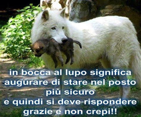 Frasi Sulla Porta by Scaramanzia Frasi Sulla Fortuna