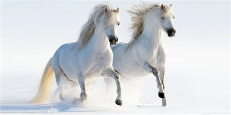 Horse Most Beautiful Horses in the World