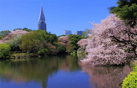 shinjuku gyoen national garden 50 things to do in shinjuku tsunagu japan